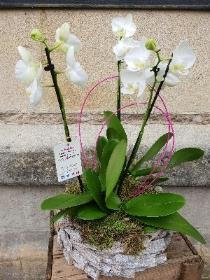 Orchid Nest